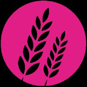 Kutzer Logo Bildmarke Gerste